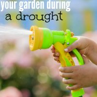 How to water your garden during a drought